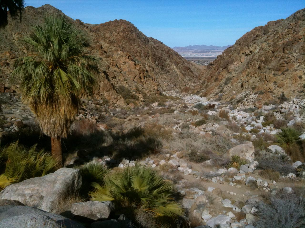 49 Palms Oasis Trail – Joshua Tree National Park, California