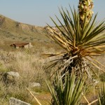 Yucca plant near the trail.