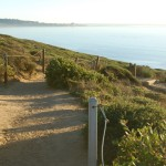 Trail overlooking the Pacific Ocean at Torrey Pines State Reserve.