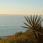 View of the Pacific Ocean at Torrey Pines State Reserve.