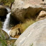 Waterfall near the oasis on the Borrego Palm Canyon Trail.
