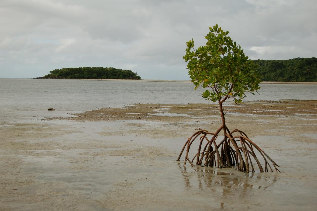 Papageno Resort to Naivakarauniniu – Kadavu, Fiji