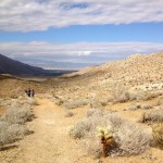 Palm Canyon Trail near Palm Springs.