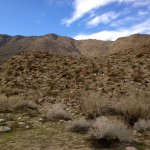 Cahuilla Canyon trail near Palm Springs.