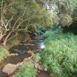 Opaekaa Stream near beginning of Kuamoo-Nounou trail