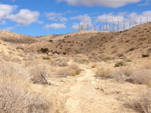 Cows and windmills above the Pacific Crest Trail at the beginning of section C near Whitewater, California