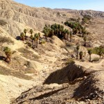 View of Horseshoe Palms in the Coachella Valley Preserve.