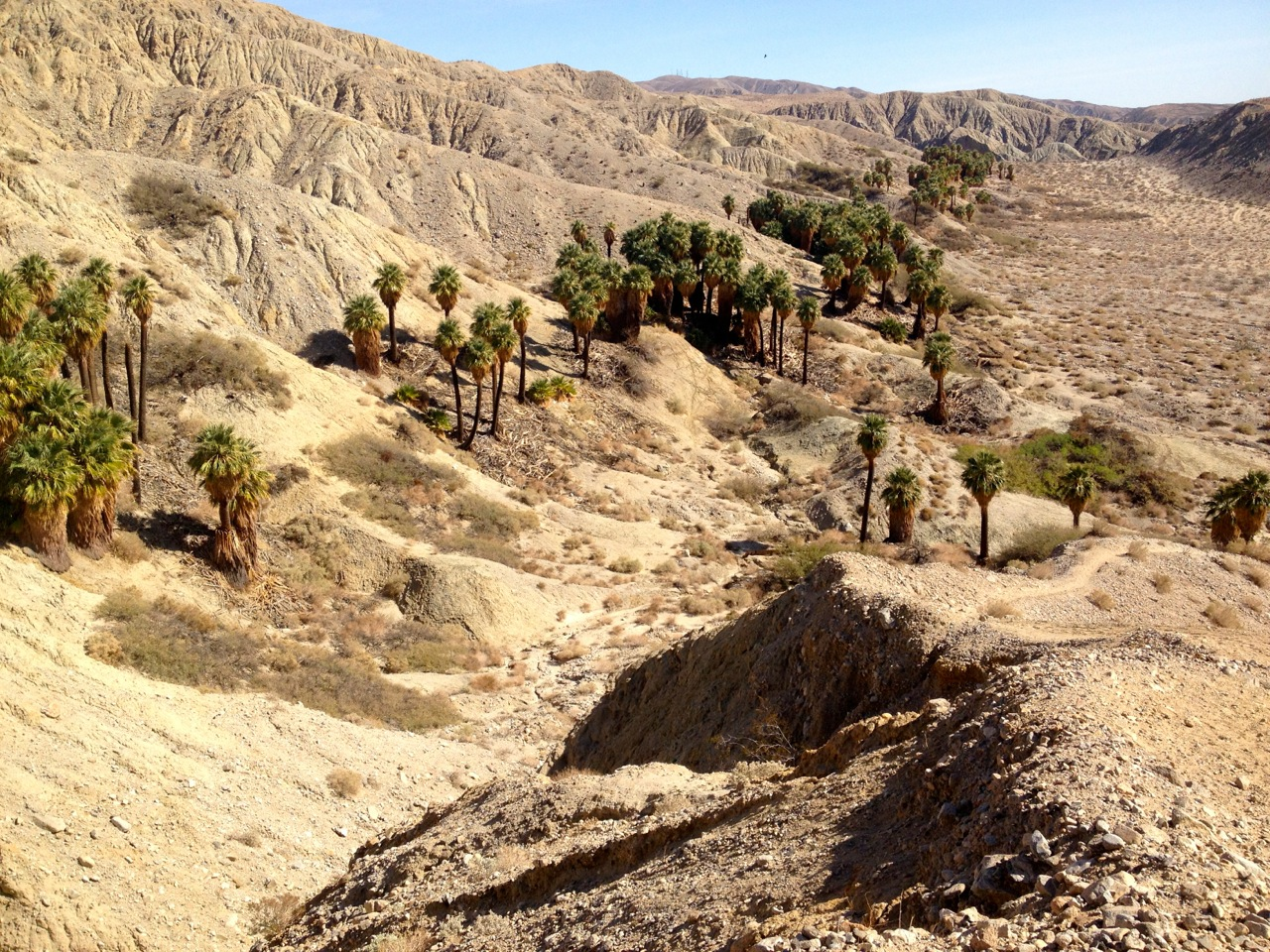Horseshoe and Hidden Palms – Coachella Valley Preserve, California