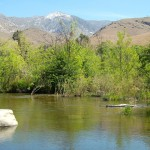 Calm section of the Kern River