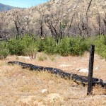 Burned trees along Whiskey Flat Trail