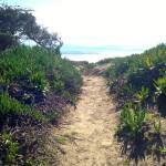 Trail near the UCSB Lagoon