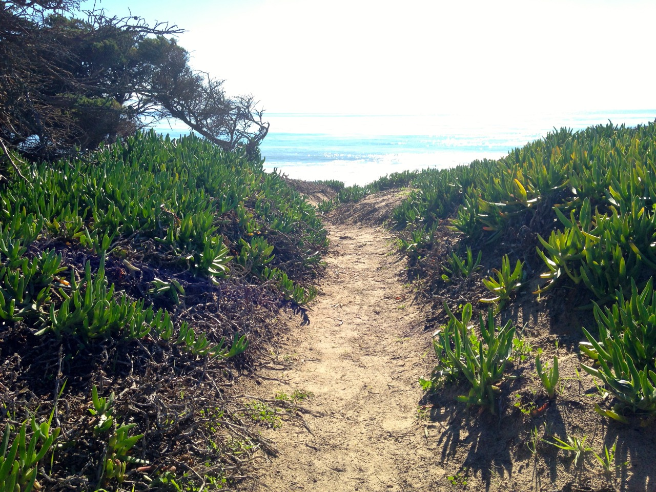 Trail near the UCSB Lagoon