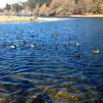 Lake Gregory Regional Park