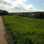 Trail through More Mesa