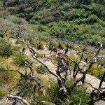 Signs of fire remain along the Coon Creek Trail