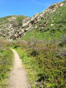 Coon Creek Trail in Montaña de Oro State Park