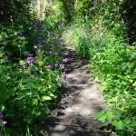 Wildflowers along Coon Creek Trail in Montaña de Oro State Park