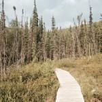Angel Rocks Trail east of Fairbanks, Alaska