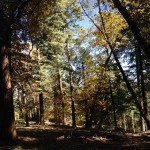 Dogwood Trail at Dogwood Campground near Lake Arrowhead, California