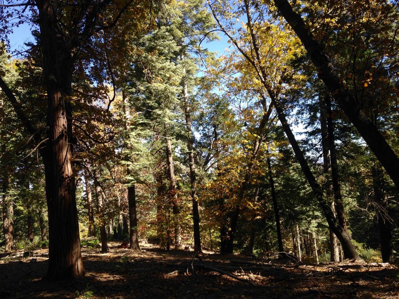 Dogwood Trail at Dogwood Campground near Lake Arrowhead, California