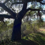 Hiking the Franklin Trail in Carpinteria, California