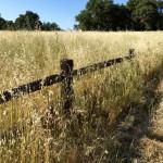 Musch Trail to Eagle Rock in Topanga State Park, California