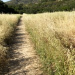 Musch Trail to Eagle Rock in Topanga State Park, California