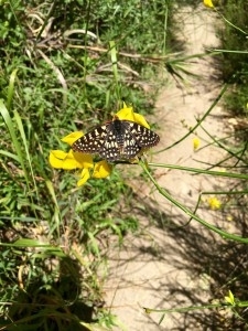 Butterfly on the Santa Ynez Waterfall Trail in Topanga State Park, California