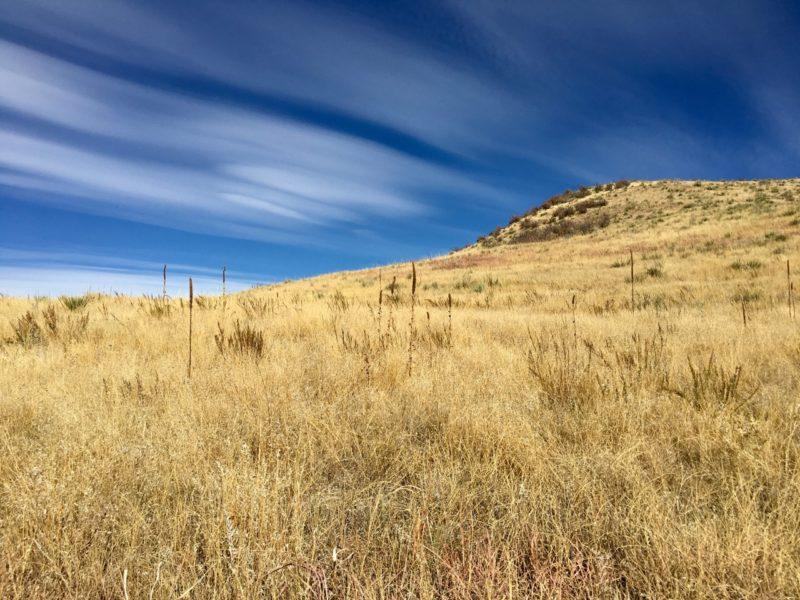 Bluffs Regional Park Trail near Lone Tree, Colorado