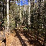 Black Canyon Trail near Santa Fe, New Mexico