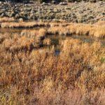 Santa Fe Canyon Preserve Trail