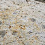 Dinosaur tracks on the Dinosaur Ridge Trail near Morrison, Colorado